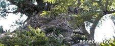 Gizli Yusufçuklar
