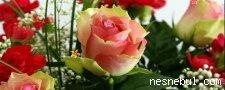 Gizli Çiçekleri Bul