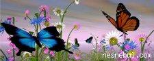 Kelebekler Gizli Yıldız Bul