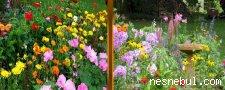 Çiçekler Benzerlik
