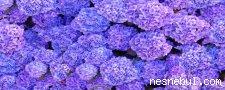 Çiçekler Yıldız Arama