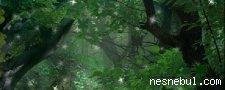 Sihirli Orman